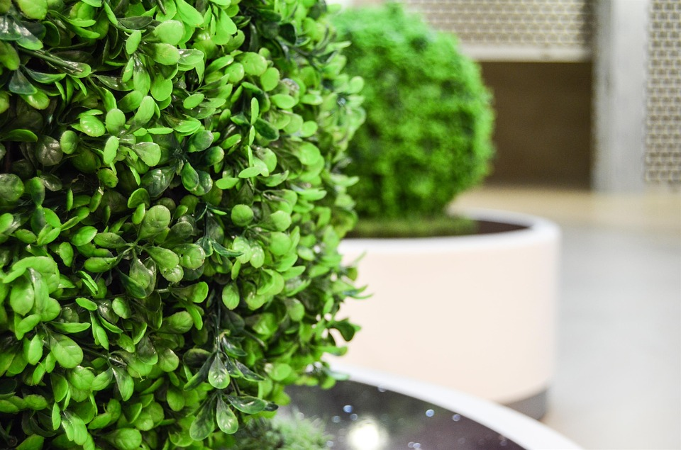 Asioita, jotka on tiedettävä keinotekoisista kasveista